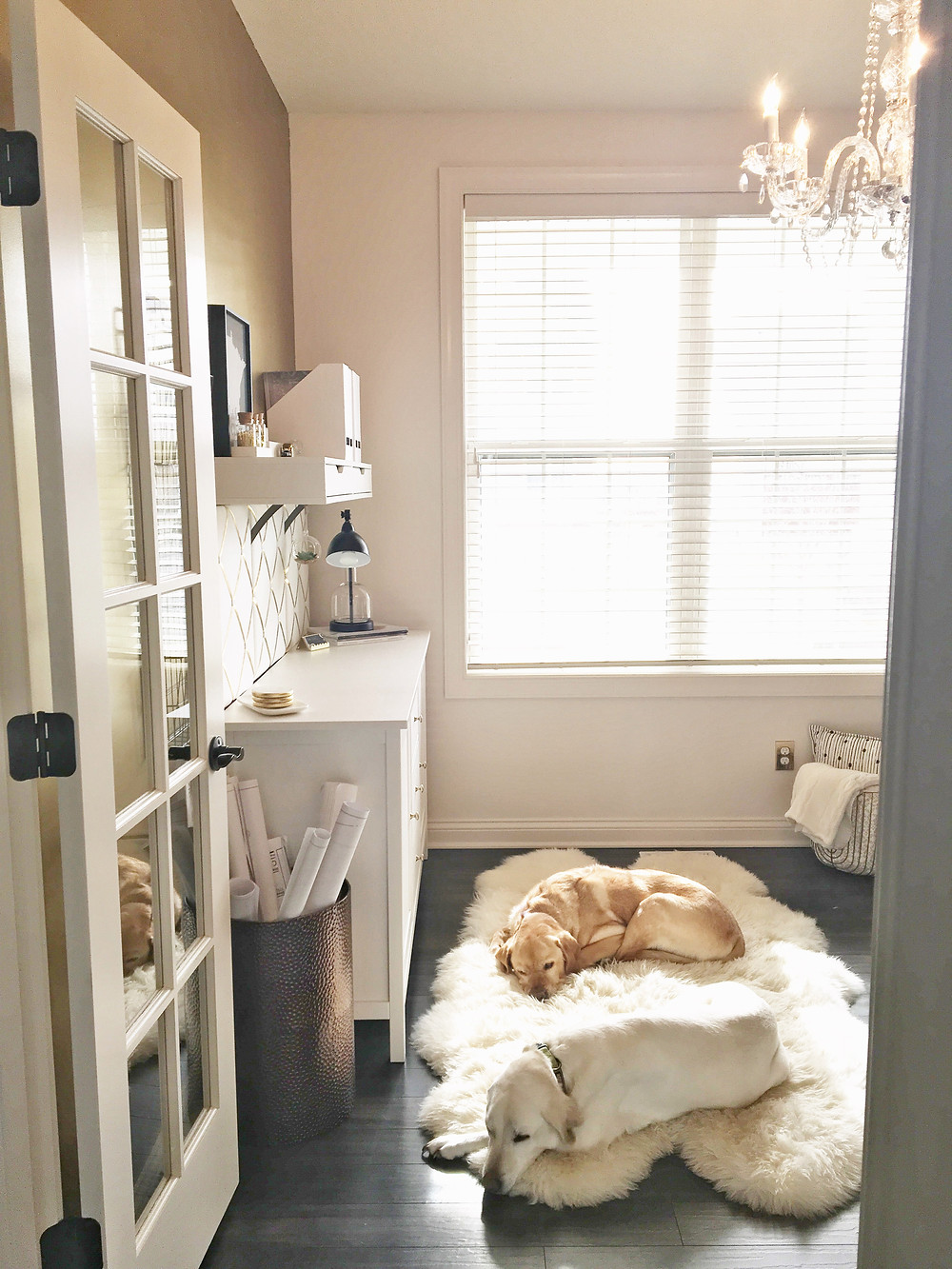 Puppies sleeping in the EH Design Interior Design Office with SW Moderate walls and accent gold wall