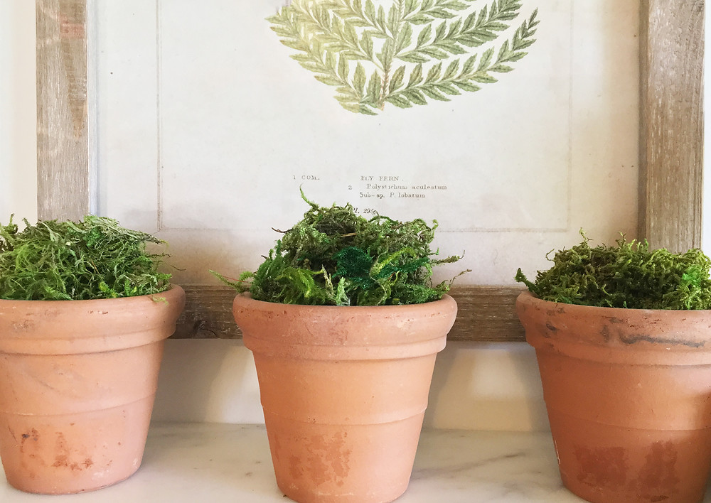 EH Design Blog - The Many Faces of Moss - Example moss in natural terracotta pots