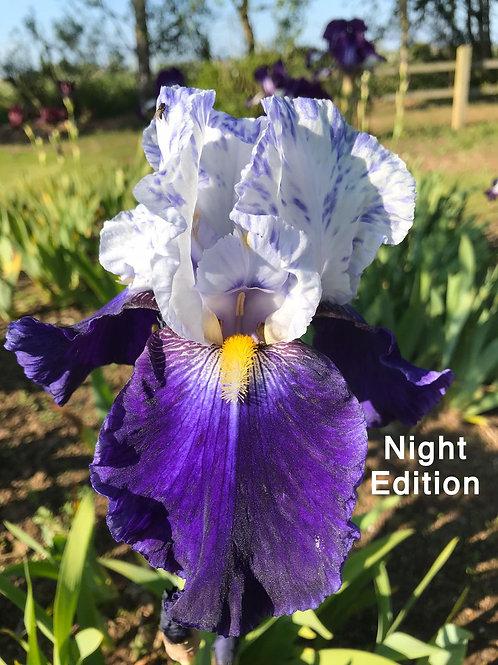 Night Edition (TB)