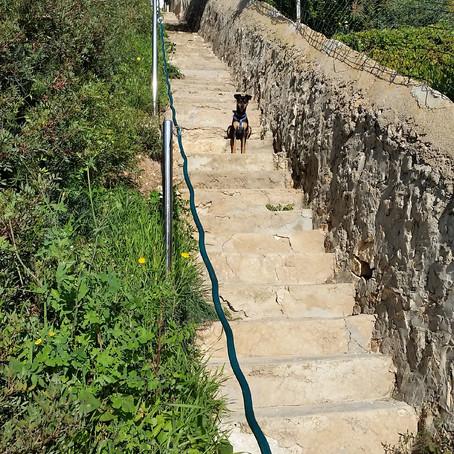 Walk the dog