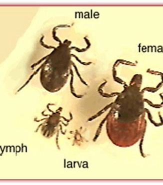Tick Collecting