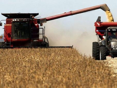 Soja, trigo y maíz: la estrategia para capturar precio