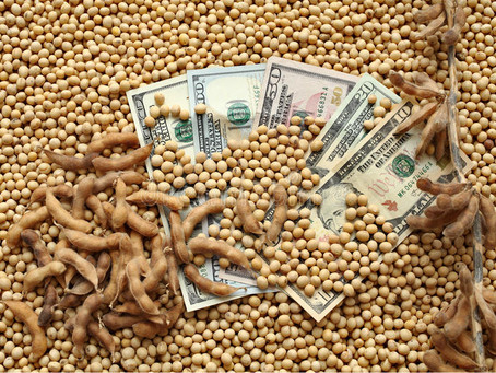 La entrada de dólares del agro en el primer semestre del año fue récord histórico.