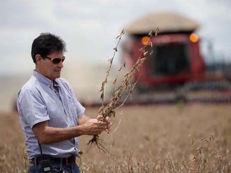La soja cede protagonismo en el campo argentino: qué intención tienen los productores
