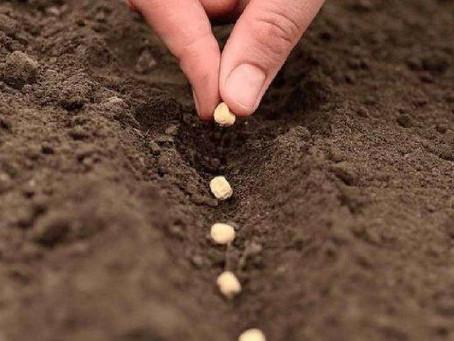 Agrodólares: el campo aportará más de u$s35.700 millones en 2022