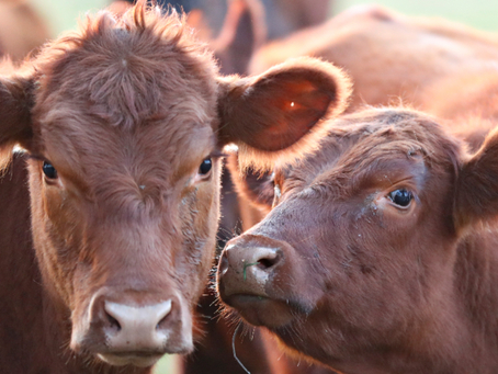 La producción de carne puede ser compatible con la conservación del medio ambiente
