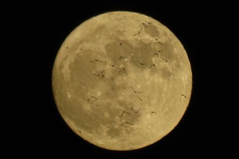 Bat_Moon.jpg