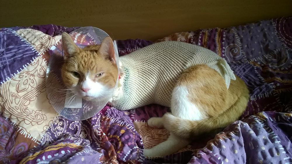 Operace kočky po srážce autem