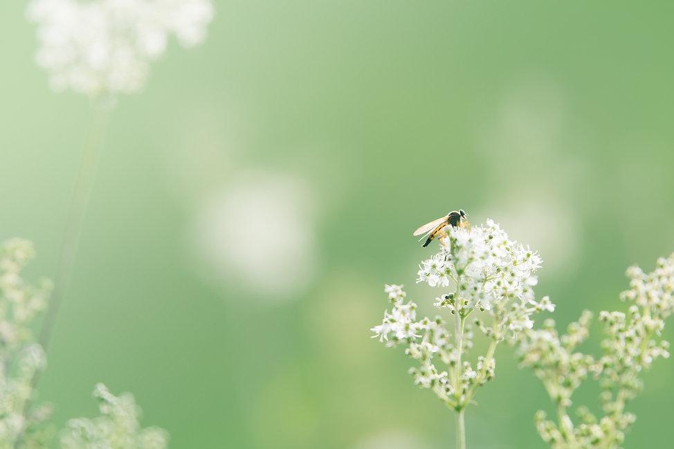 wild-flower-1561912.jpg