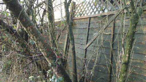 Battered Fencing behind trees