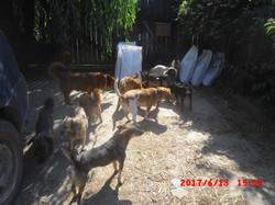 Carmen's dogs