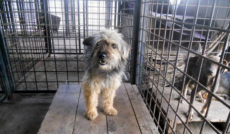 Tilly in the kill shelter... please take