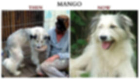 Mango ~ Before and After