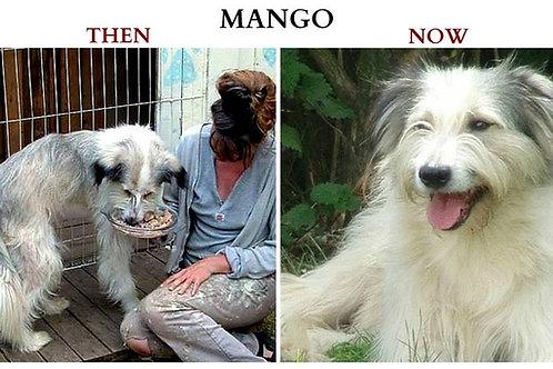 Please become MANGO'S Sponsor