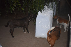 Dogs inspecting delivery