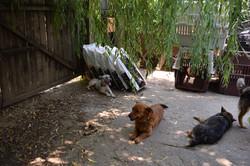 Dogs relaxing in Carmen's yard