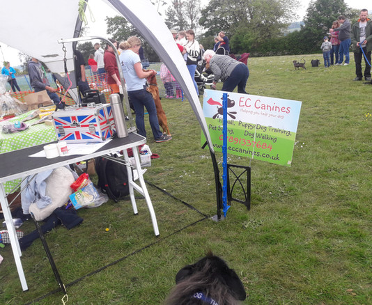 EC Canines Stall