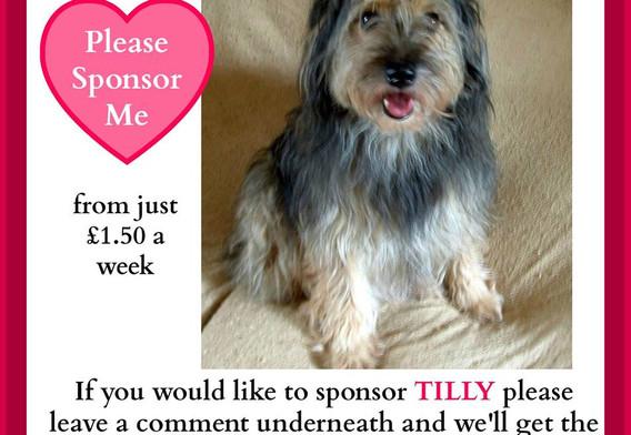 Please sponsor Tilly