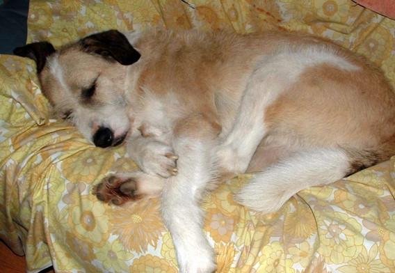 Moko Comfy and Asleep on the sofa