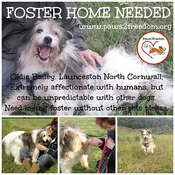 PLEASE FOSTER BAILEY