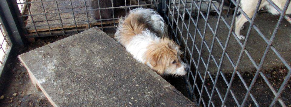 terrified in the kill shelter, desperate