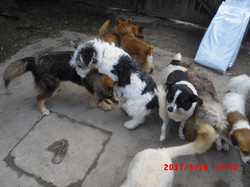 Carmen's dogs playing