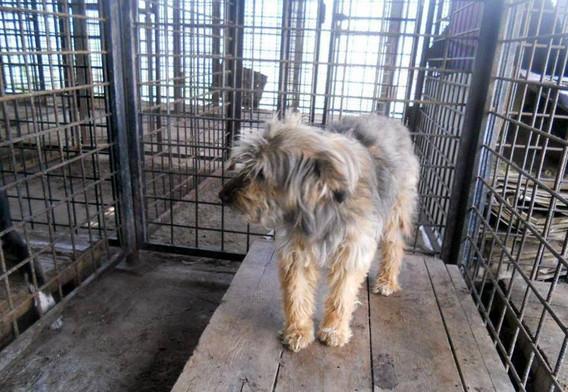 Tilly in the kill shelter