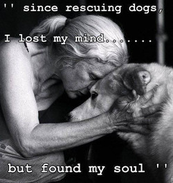 THE SPIRIT OF DOG RESCUE
