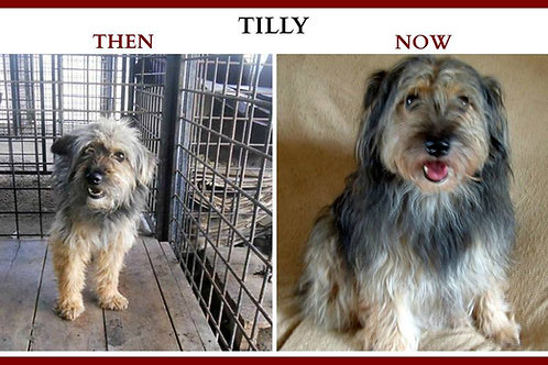 Please become TILLY'S Sponsor