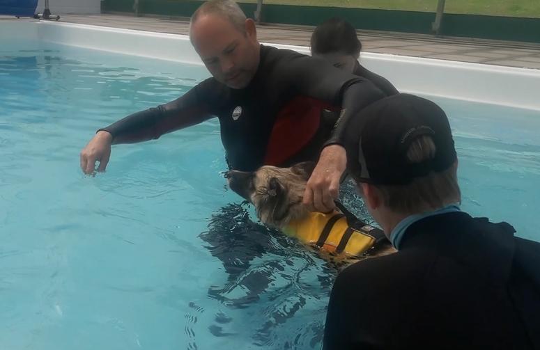 swimming again.