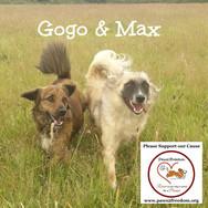Gogo & Max