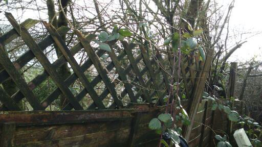Fence is falling to bits here too...