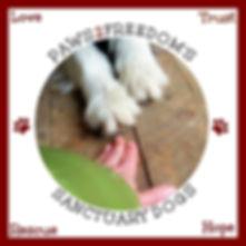 Please sponsor a Paws2Freedom dog