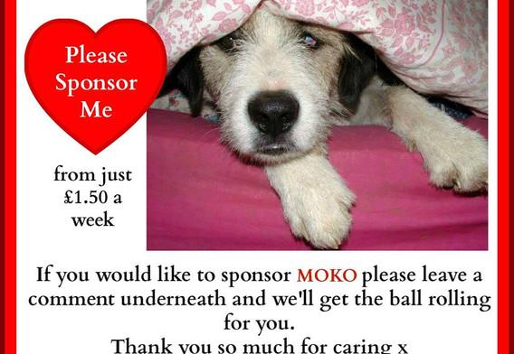 Please sponsor Moko