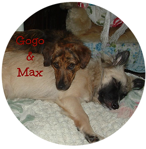 Max & Gogo in the UK
