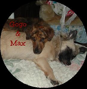 Max & Gogo in the UK