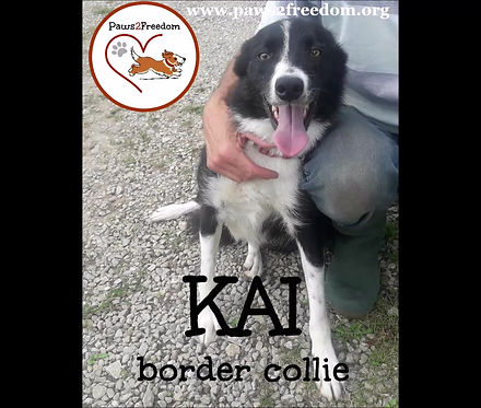 Hello my name is Kai. And this is me. Friendly and playful. I am a lovely boy. Please adopt me!