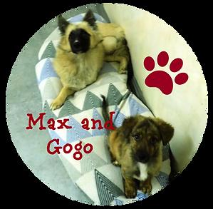 Max & Gogo as Pups