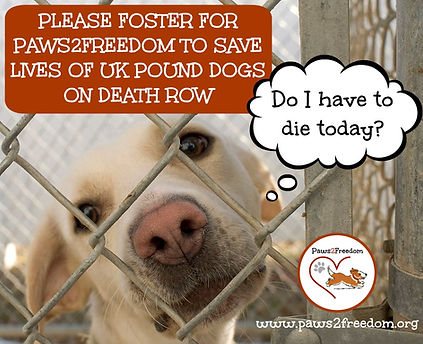 Foster a Death Row Pound Dog for Paws2Fr