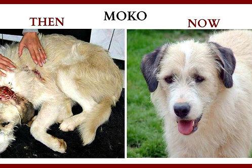 Please become MOKO'S Sponsor
