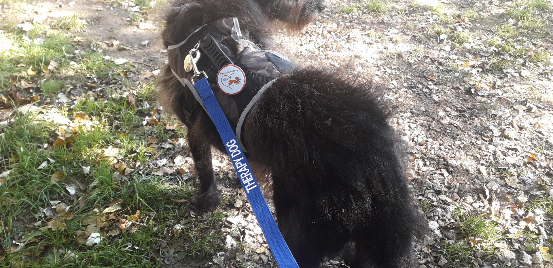 Max's outfit with special lead and Paws2Freedom Pin