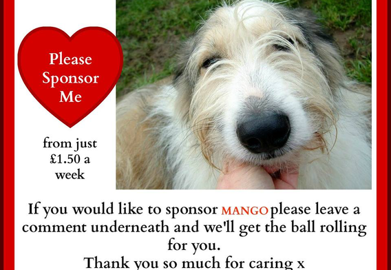 Please become Mango's Sponsor?
