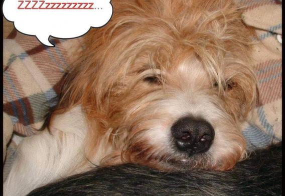 Happy sleep head Spencer