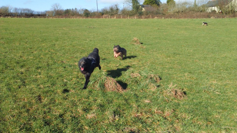 Tilly running with her Aran
