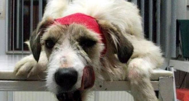 Moko after life saving surgery