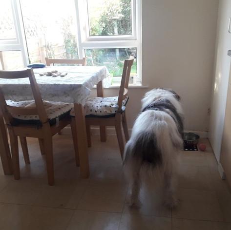 Bailey exploring his new home.