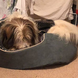 Bailey trying out his new bed