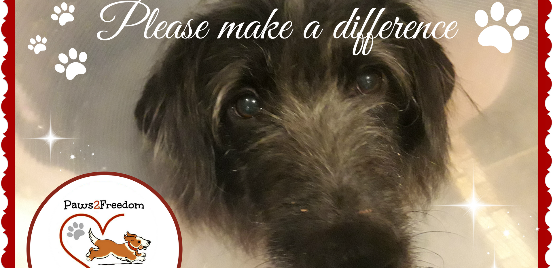 PAWS2FREEDOM URGENT VET COST APPEAL