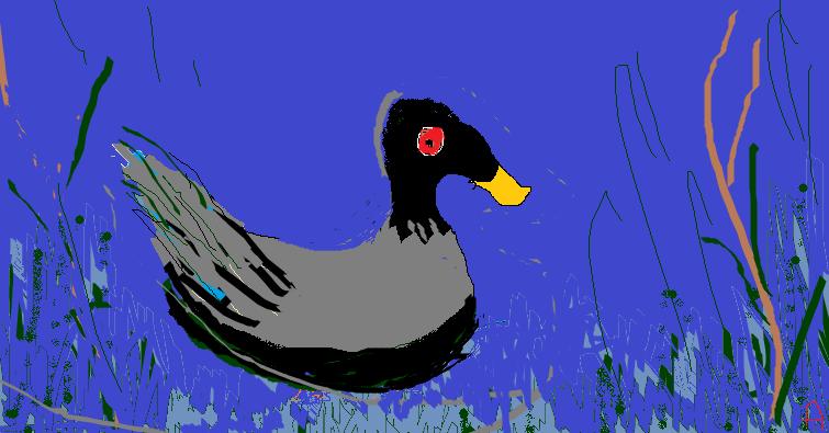 wild baby flowersa lone duck