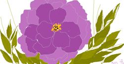 an open violet rose
